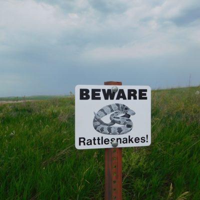 Rattlesnakes And Your Faith