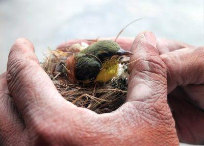 baby bird in a hand